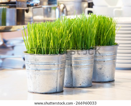 Close up wheatgrass sprouts in tin pot for decoration on table - stock photo