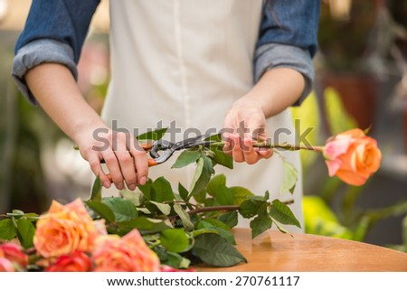 Close-up. Young female florist pruning rose in frowers shop. - stock photo