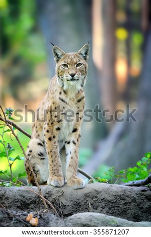 Close-up young lynx in spring time - stock photo
