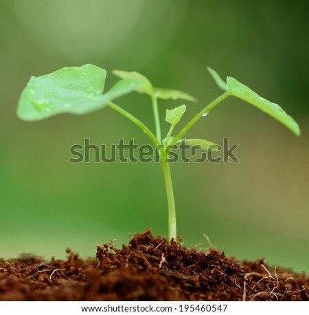 Close up Young plant growing on brown soil - stock photo
