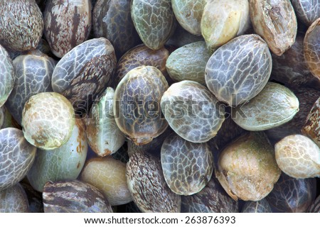Close view of hemp seeds, macro photo - stock photo