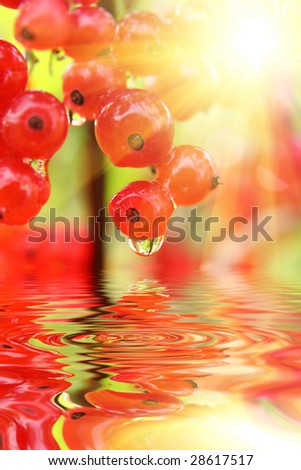 Close view of red currant berries (shallow dof) - stock photo