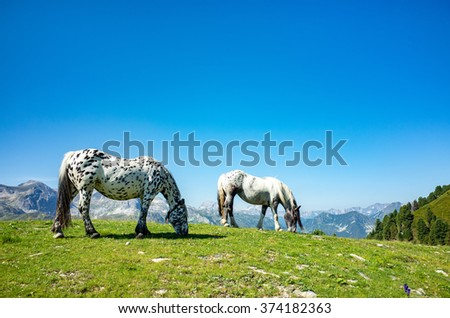 Close view on the horses in Alps Austria - stock photo