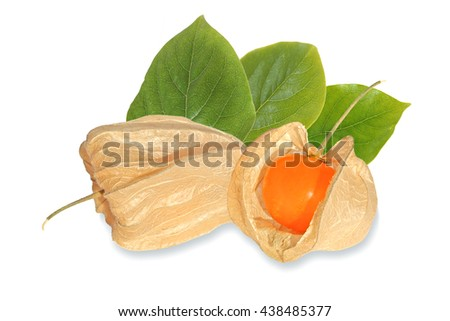 Closed and open cocoon of ripe cape gooseberry with leaves isolated on white background - stock photo