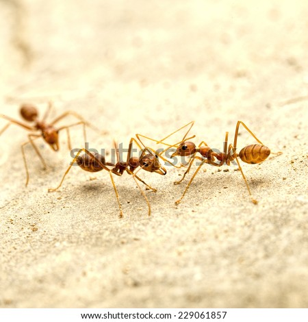 Closed - up of red ants - stock photo