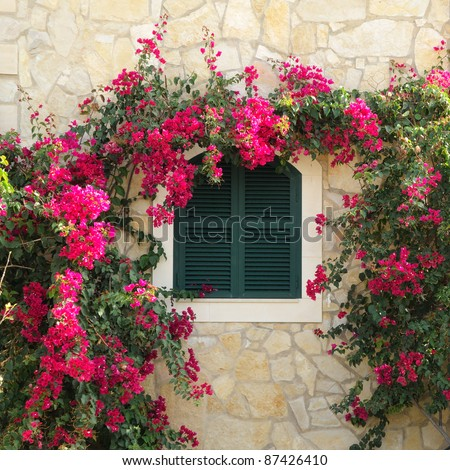 Closed window surrounded by bougainvillea - stock photo