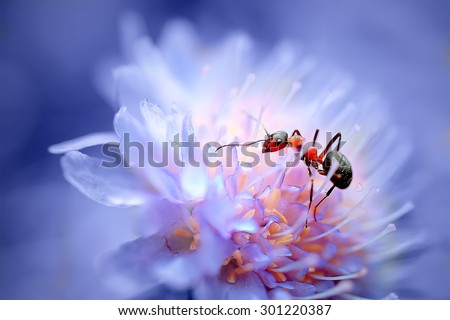 closeup ant on beautiful flower. natural macro background. picture with soft focus - stock photo