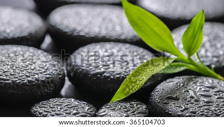 closeup beautiful spa background of green branch bamboo on zen basalt stones with dew, panorama   - stock photo