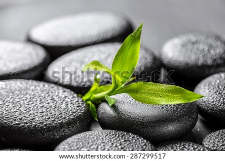 closeup beautiful spa concept of green twig bamboo on zen basalt stones with water drops  - stock photo