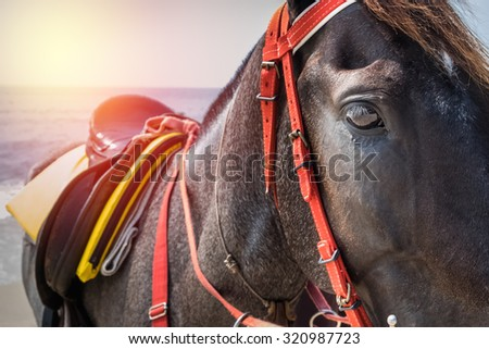 closeup black horse on the beach - stock photo