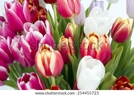 Closeup bouquet of tulips isolated on white background - stock photo