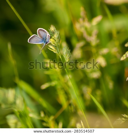 Closeup Butterfly on the Grass - stock photo