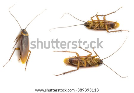 Closeup cockroach collection isolated on a white background - stock photo