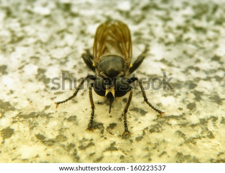 Closeup detail of fly with big eyes. - stock photo