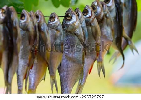 closeup drying fish - stock photo