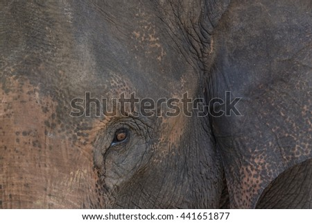 Closeup,Eye of an elephant. - stock photo