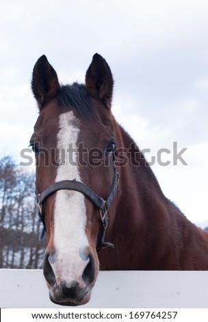 Closeup face of horse - stock photo