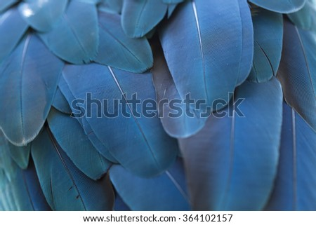 Closeup feather blue and gold Macaw ,Background - stock photo