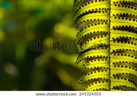 Closeup Fern in the garden - stock photo