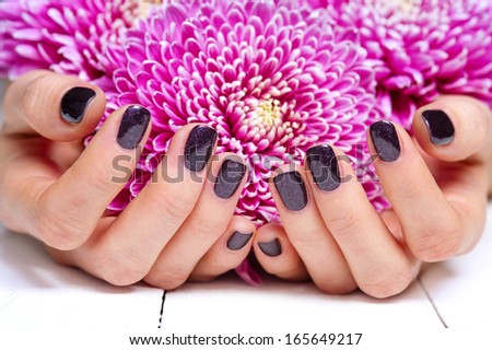 Closeup fingernails with dark fashion manicure, cupped woman beautiful manicured hands holding pink flowers - stock photo