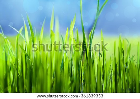 closeup fresh green grass, naural soft focus background - stock photo