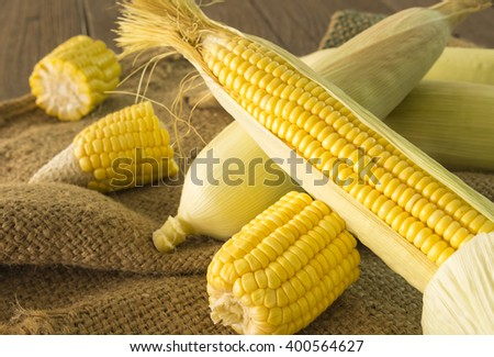 Closeup, fresh sweet corn on a sack on a wooden table. - stock photo