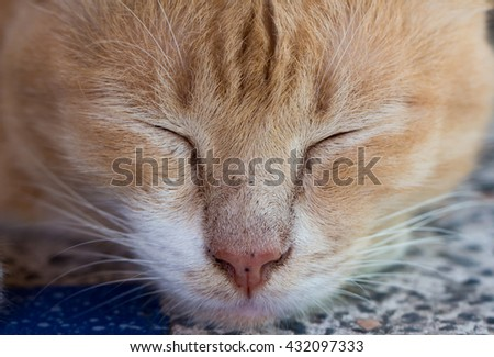 Closeup ginger cat sleeping on a table  - stock photo