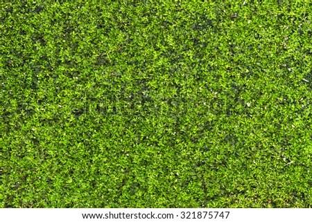 Closeup green fern - stock photo