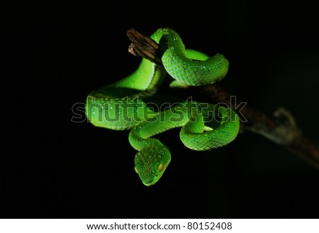 Closeup green snake in rain forest, Thailand - stock photo