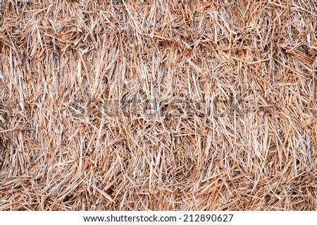 closeup haystack after the harvest of wheat,  natural  background - stock photo