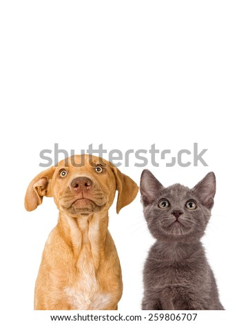 Closeup image of a cute young puppy and kitten together looking up into empty copyspace - stock photo