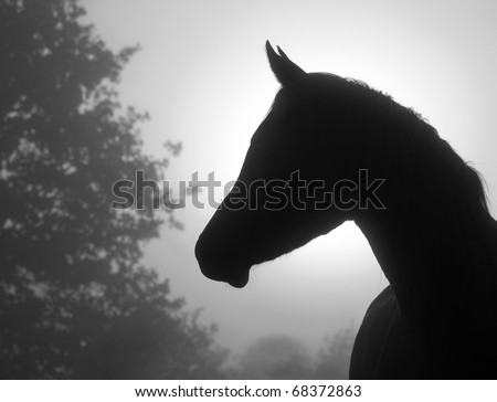 Closeup image of a refined Arabian horse's profile against heavy fog and sunrise, in black and white - stock photo