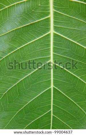 closeup leaf background - stock photo