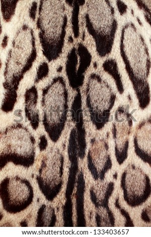 Closeup leopard hair for background use - stock photo