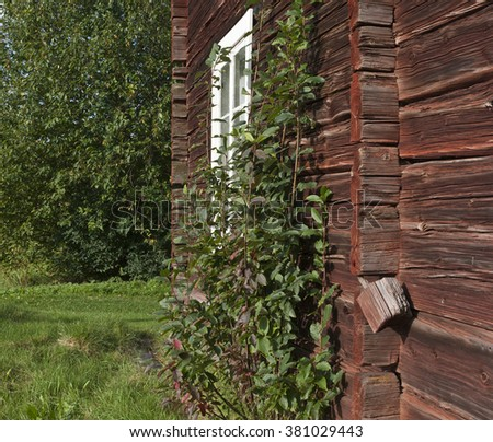 Closeup, macro of red painted logs, timber on a buildings wall. Ancient construction of putting logs together into a house. Vegetation in the surrounding. - stock photo