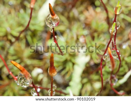 Closeup nature. Wet sprouts. Forest undergrowth. - stock photo