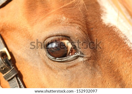 closeup of a big horse head with detail on the eye - stock photo