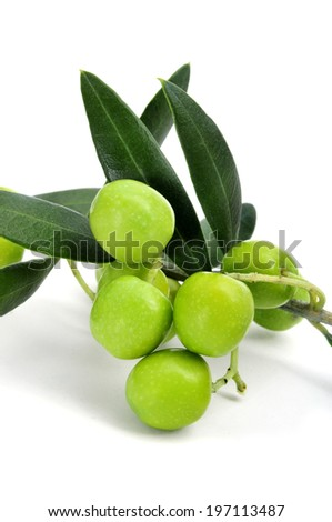 closeup of a branch of olive tree with olives on a white background - stock photo