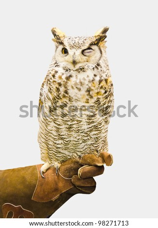 "Closeup of a brown owl with ""ironical"" expression. Isolated on gray. - stock photo"