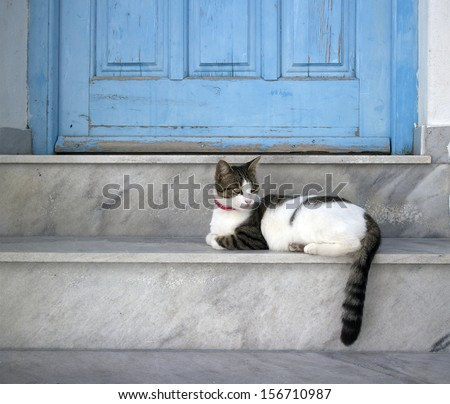 closeup of a cat lying on a step in front of a  blue door entrance in paros greece - stock photo