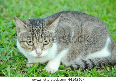 Closeup Of A Cat On The field - stock photo