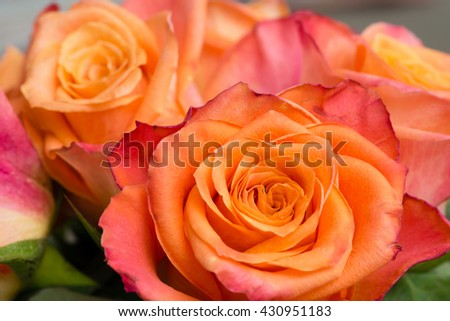 Closeup of a couple of orange roses - stock photo