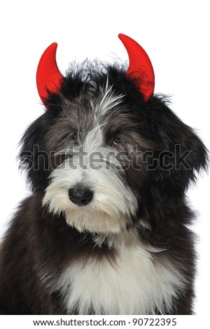 Closeup of a cute bearded collie puppy wearing red devil's horns vertical - stock photo