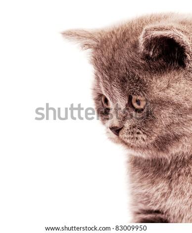 Cat Profile Stock Phot...