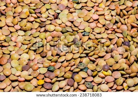 closeup of a handful of Italian lentils - stock photo