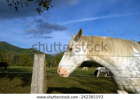 Closeup of a horse in Cades Cove inside Great Smoky Mountains National Park - stock photo