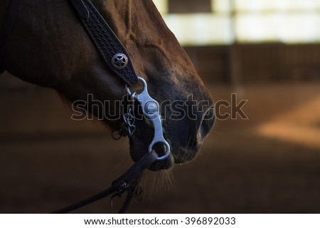 closeup of a horse mouth with a curb bit, for example used in western riding, copy space - stock photo