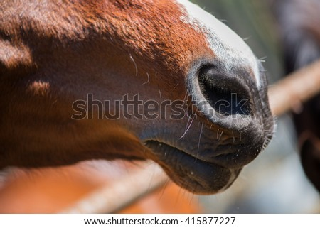 Closeup of a horse's nose  - stock photo