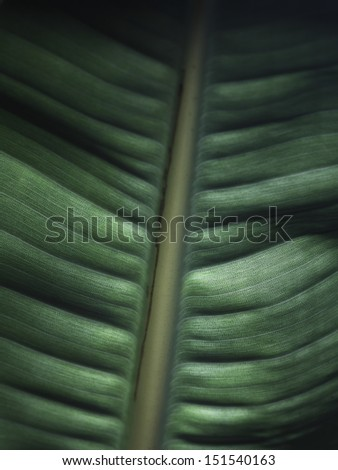 Closeup of a leaf showing it's leaf veins. - stock photo