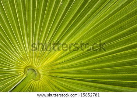 Closeup of a palm leaf pattern in the Riviera Maya area of Mexico - stock photo